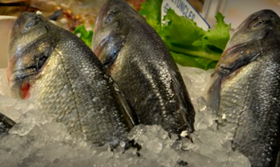 poisson centre-ville sherbrooke